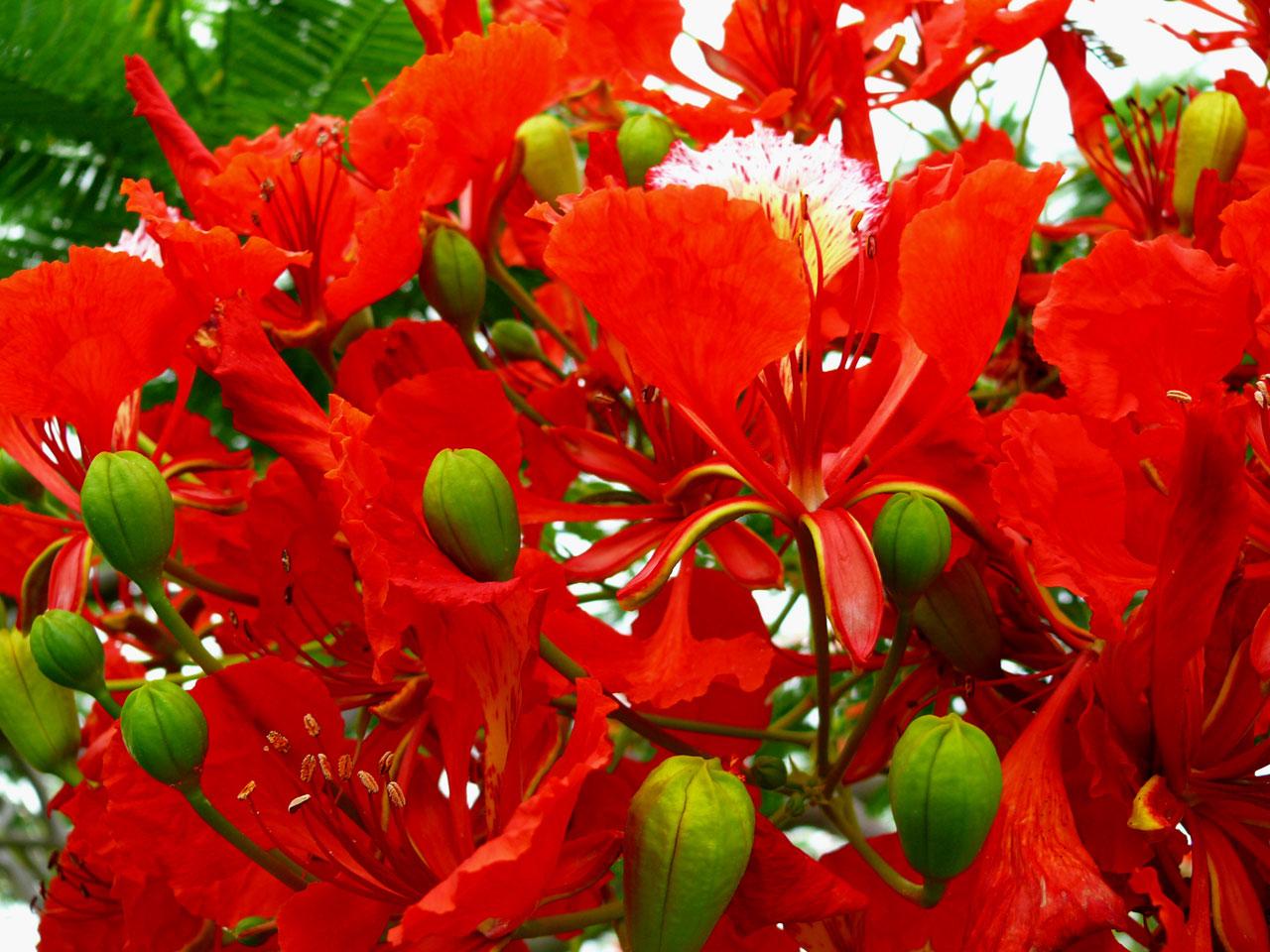 fleurs exotiques rouges photos du domaine public. Black Bedroom Furniture Sets. Home Design Ideas