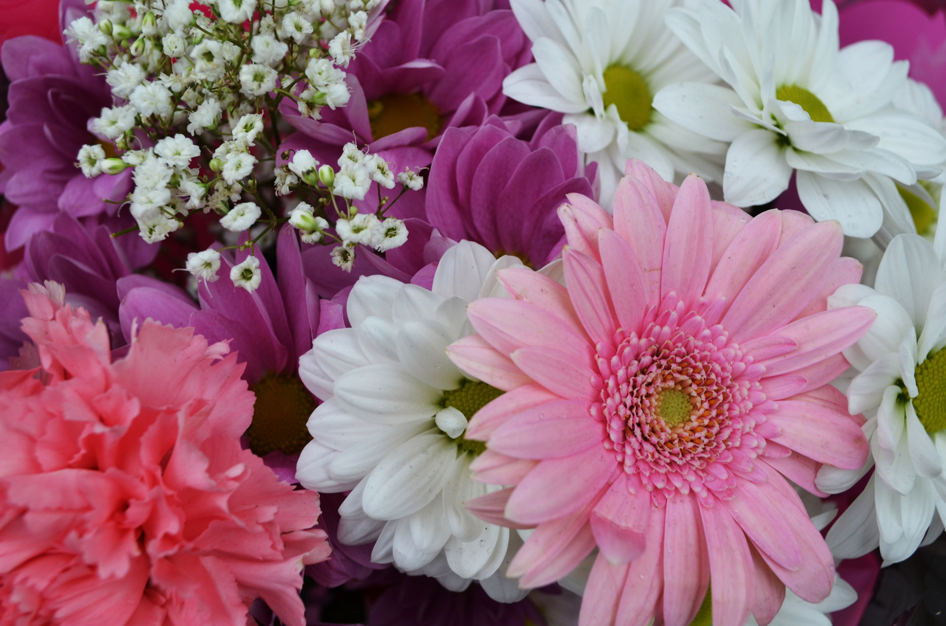 Spring bouquet of different flowers public domain photos different conceptlentine flowers download izmirmasajfo