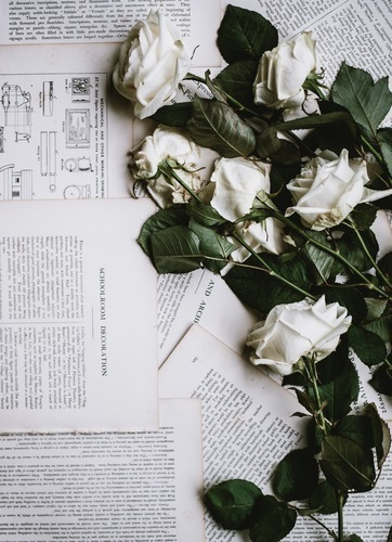 Torn book pages and white roses
