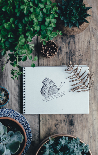 Butterfly drawing between plants