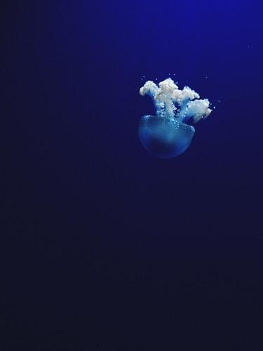Risultati immagini per mare profondo