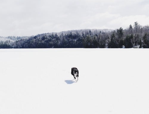 Dog in snowy Canadian mountain