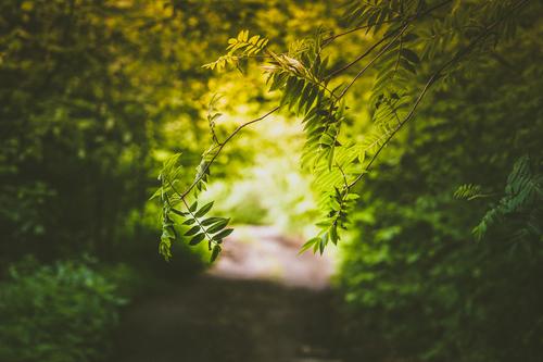 yeşil dallar ile ilgili görsel sonucu