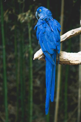 Spiksplinternieuw Blauwe papegaai | Foto's in het publiek domein IZ-49