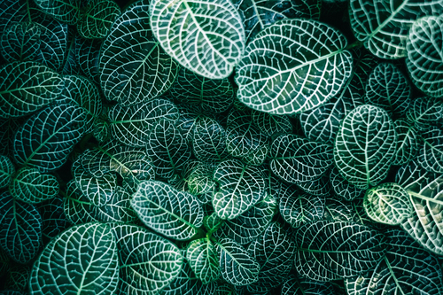 Green leaves image