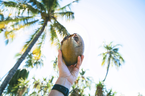 Coconut in hands