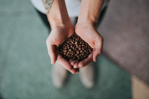Coffee beans in palms