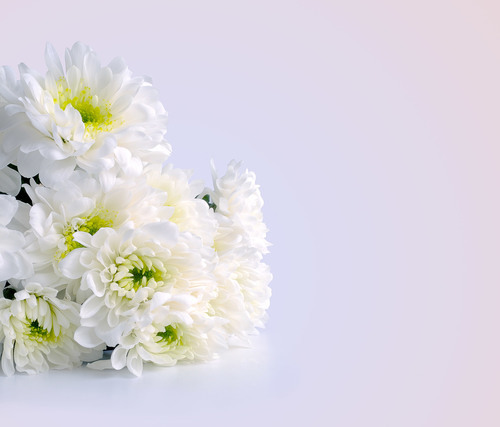 Bunch Of White Flowers Public Domain Photos