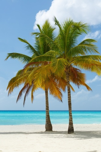 Palm Trees On Sandy Beach