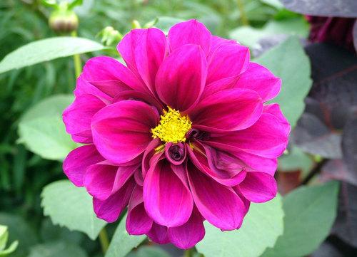 Tek çiçek Makro Görüntü Kamuya Açık Fotoğraflar