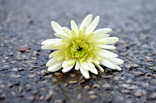 Flower On The Road