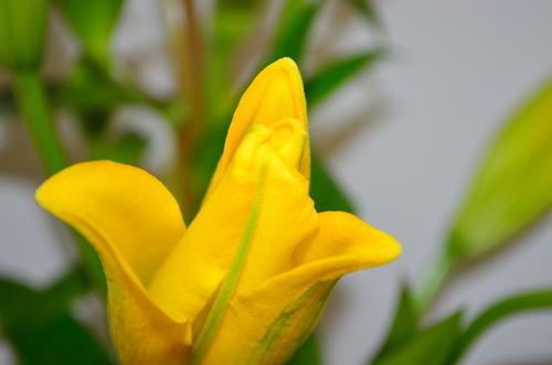Yellow flower close-up