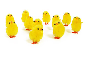 Yellow Chicks On White Background