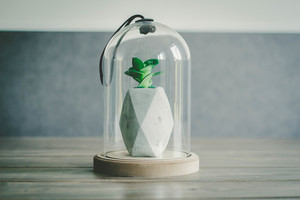 Bell jar with green plant