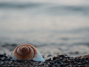 Snail shell on pebbles