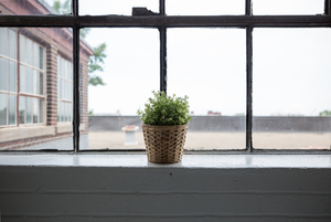 House plant on a window