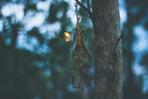 Dried leaf on a tree