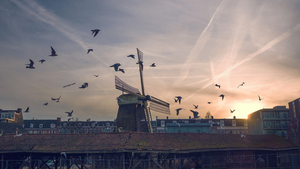 Windmill and the birds