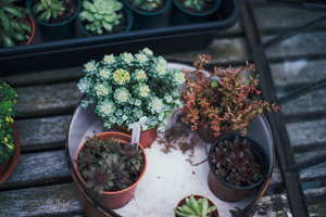 Different potted suculents in garden