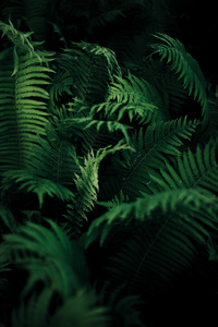 Green tree fern