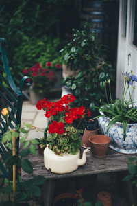 Vintage pots with flowers in garden