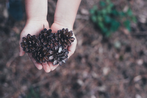 Pine cones in kid's hands
