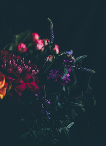 Pink and purple flowers in dark
