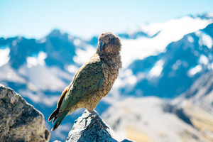 Bird on a mountain.