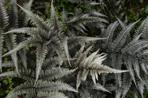 Fern branches image