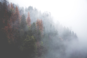 Fog above forest