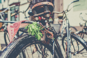 Parsley on bike