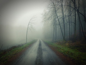Foggy and creepy road
