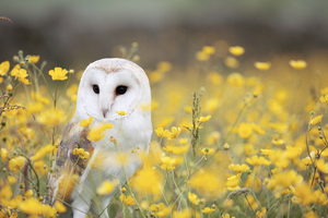 Owl among flowers