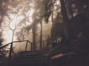 Creepy forest stairs