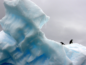 Blue iceberg with penguins