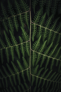 Green plant image