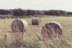 Bales of hey