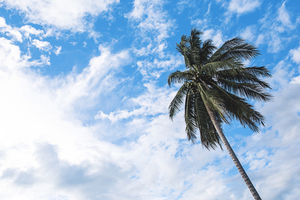 White clouds and palm