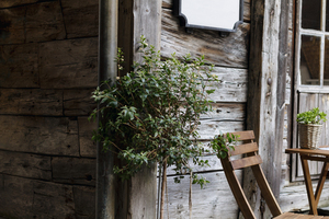 Plant and chair in front of a cabin