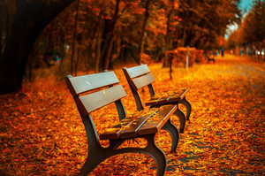 Benches in fall leaves