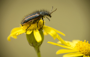 Bug on yellow flowers