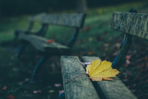 Yellow leaf on bench