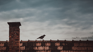 Bird on rooftop with chimney