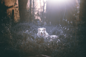 Dog in forest