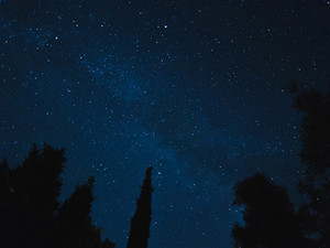 Evergreen trees under starry sky