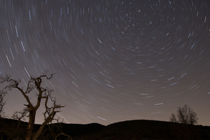 Starry sky with leafless trees