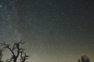Creepy forest under starry sky