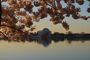 Blossom and monumental building above the water
