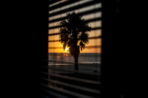 Palm through window shades