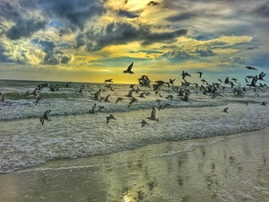 Birds flying over a beach